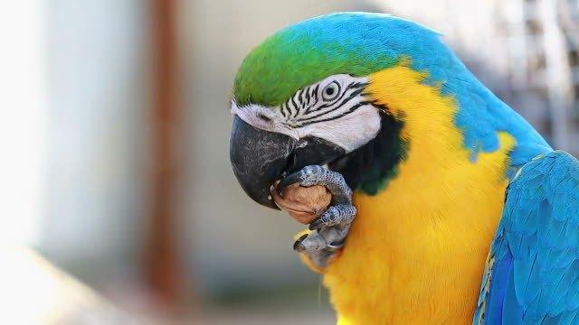Macaw v1.5.15 Crack + Serial Keygen Full 2020 {Latest}